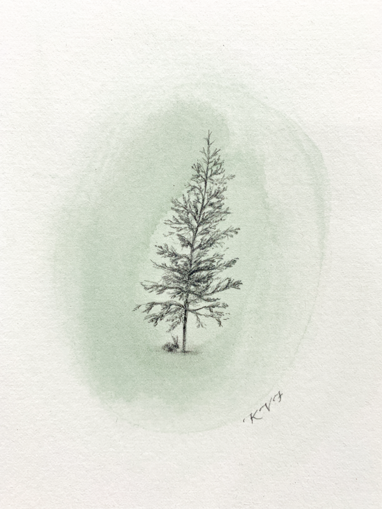 Evergreen illustration
